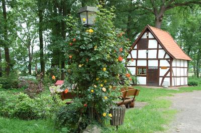 Rosenbusch_mit_Backhaus